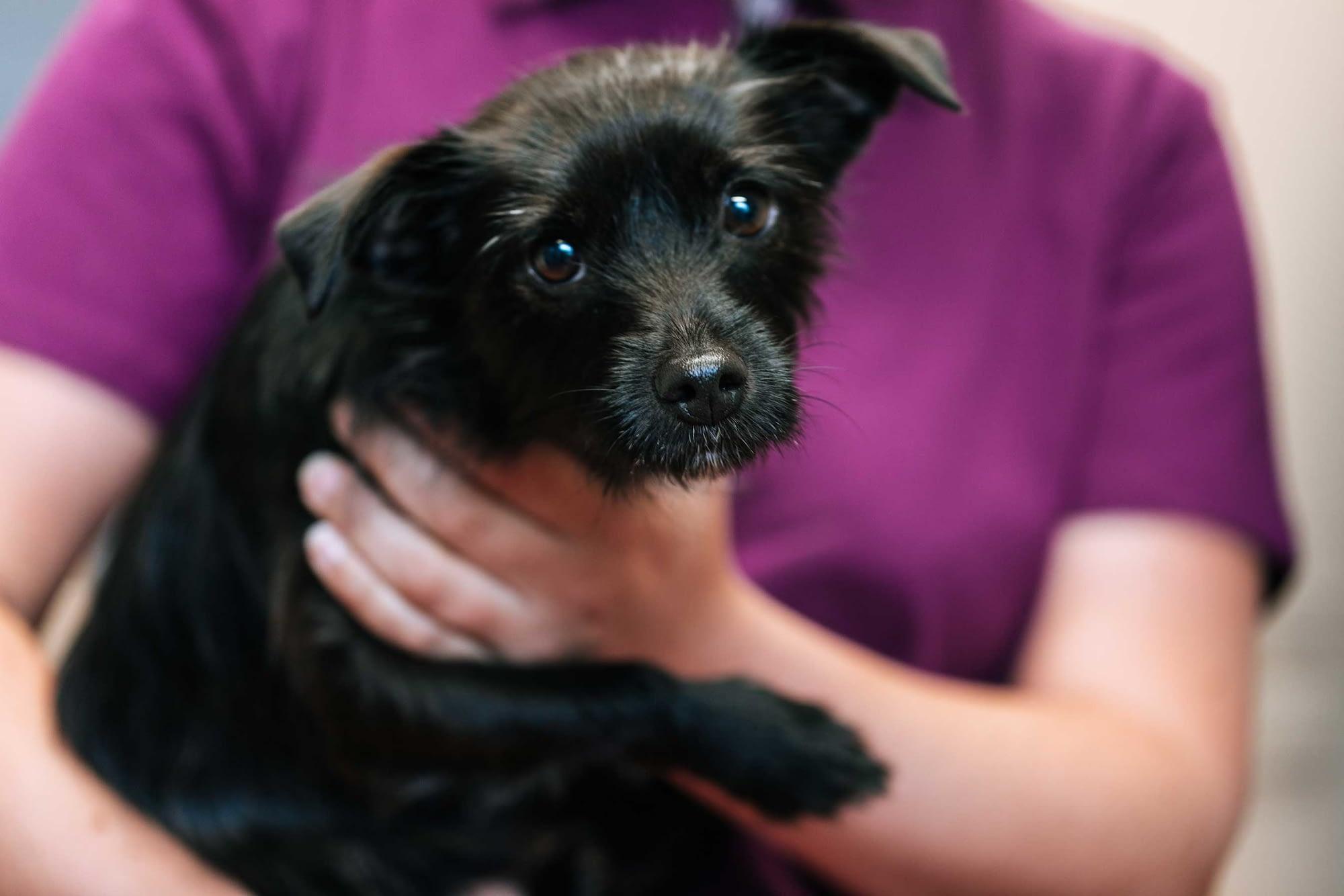 Schwarzer Hund im Arm einer TMFA - Tierarztpraxis am Paulshof