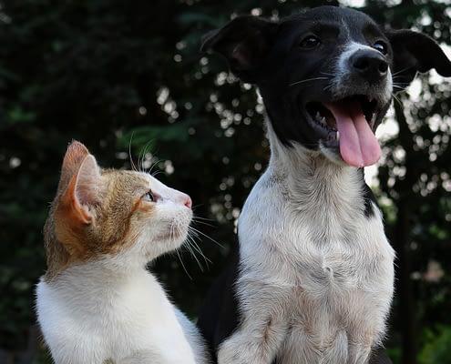 Covid-19 - Gefahr für Haustiere?
