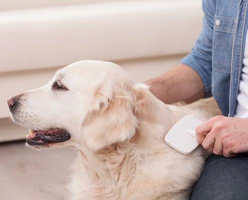 Fellpflege beim Kurzhaar-Hund: 5 Tipps