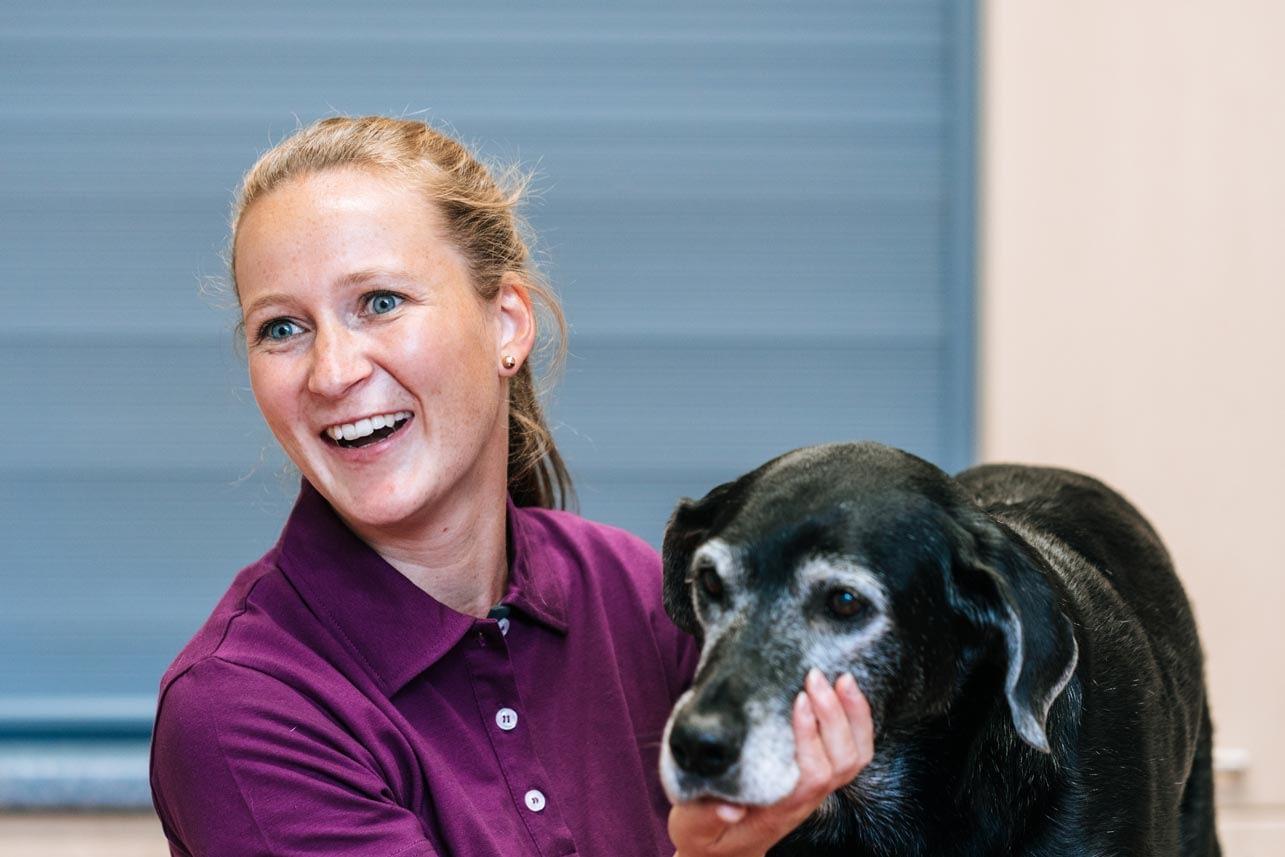 Hund während der Behandlung - Tierarztpraxis am Paulshof