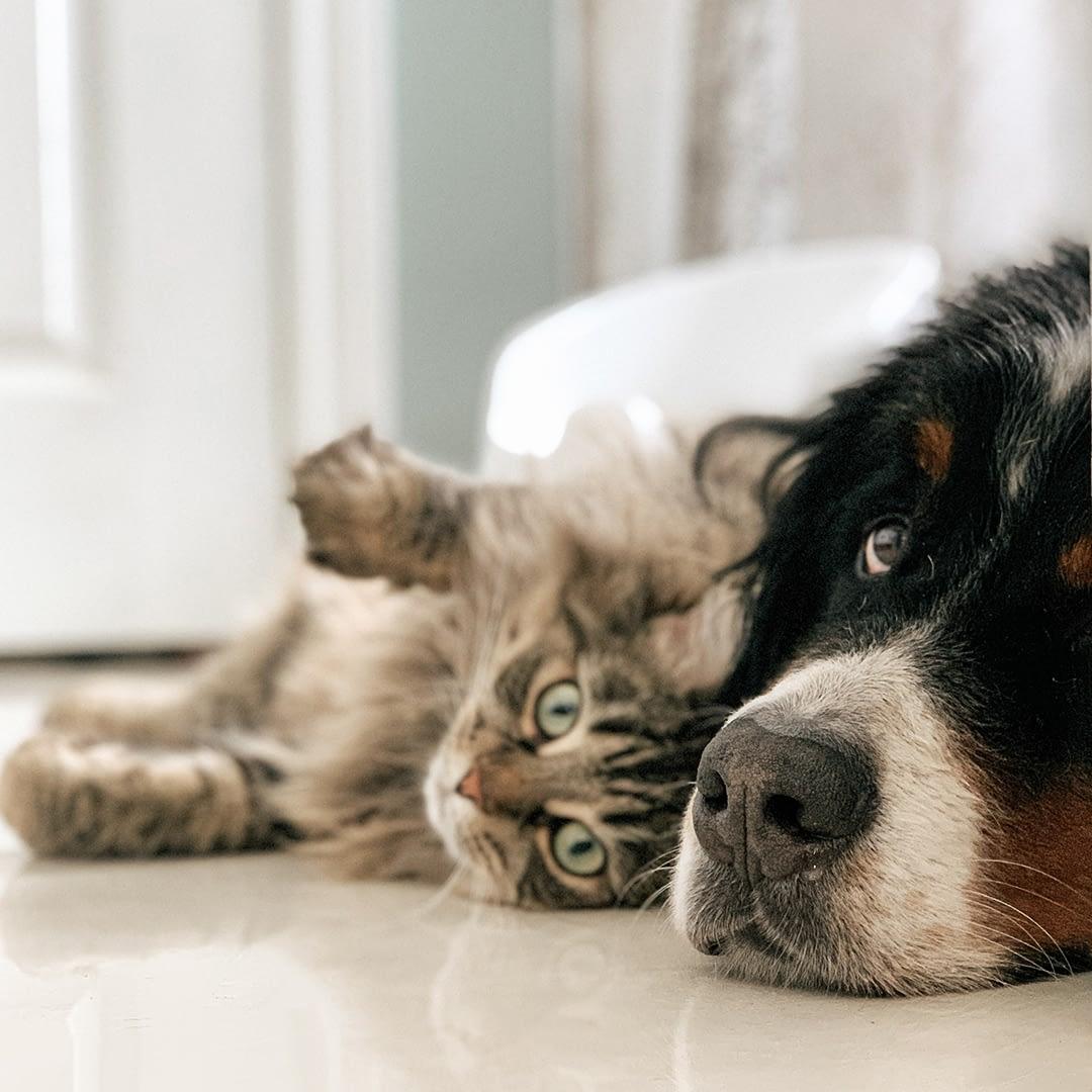 Können Haustiere COVID-19 auf den Menschen übertragen?