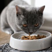 Haustierernährung